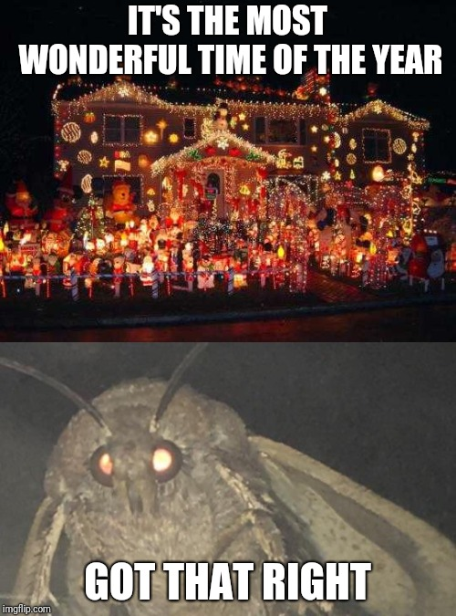 IT'S THE MOST WONDERFUL TIME OF THE YEAR; GOT THAT RIGHT | image tagged in crazy christmas lights,moth,christmas memes,damn | made w/ Imgflip meme maker