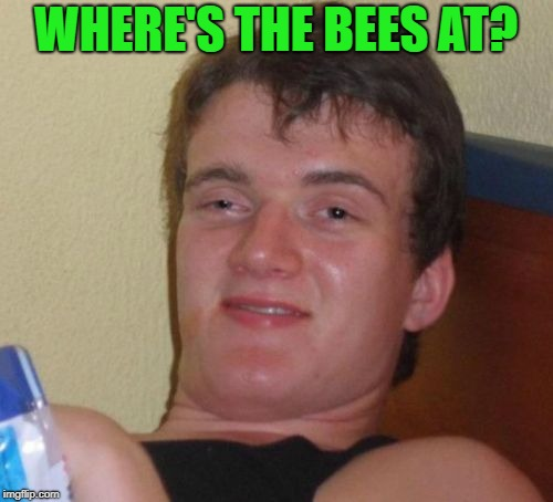 10 Guy Meme | WHERE'S THE BEES AT? | image tagged in memes,10 guy | made w/ Imgflip meme maker