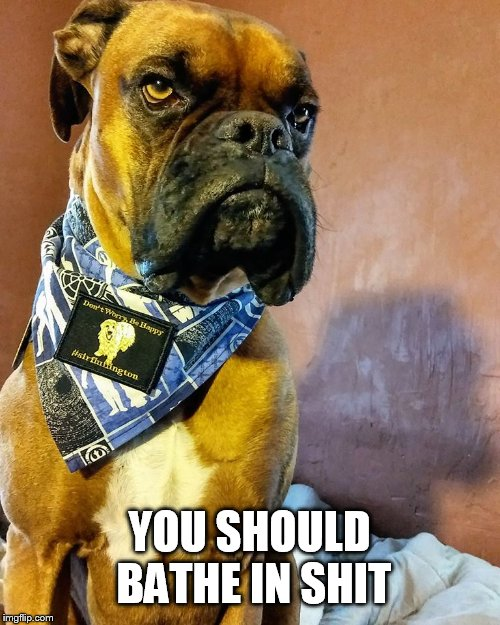 Grumpy Dog | YOU SHOULD BATHE IN SHIT | image tagged in grumpy dog | made w/ Imgflip meme maker