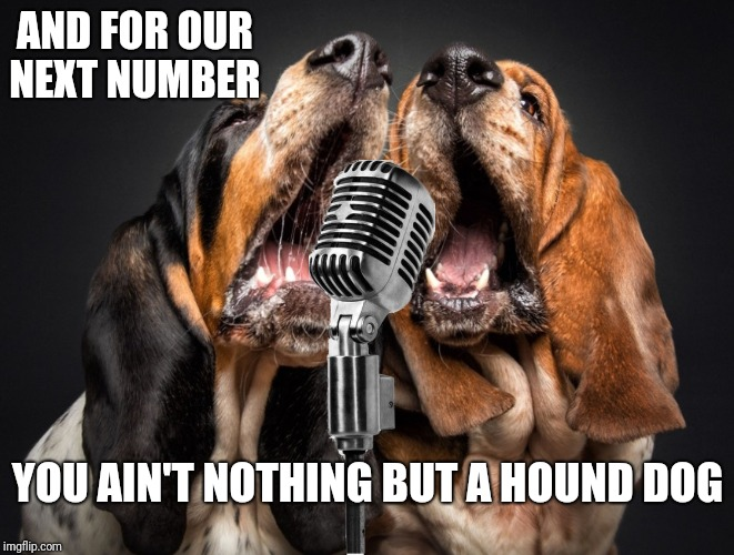 Thank you. Thank you very much!  | AND FOR OUR NEXT NUMBER YOU AIN'T NOTHING BUT A HOUND DOG | image tagged in singing dogs,elvis presley | made w/ Imgflip meme maker