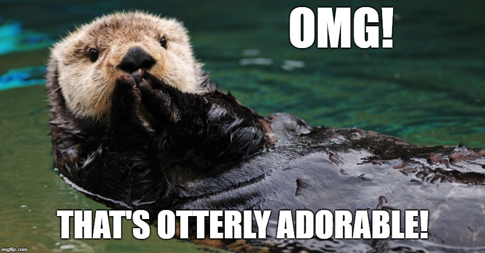 Otterly Adorable! | OMG! THAT'S OTTERLY ADORABLE! | image tagged in memes,cute,animals | made w/ Imgflip meme maker