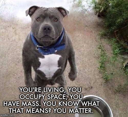 YOU'RE LIVING, YOU OCCUPY SPACE, YOU HAVE MASS. YOU KNOW WHAT THAT MEANS? YOU MATTER. | image tagged in bad pun dogs | made w/ Imgflip meme maker
