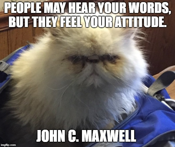 Feel Your Attitude | PEOPLE MAY HEAR YOUR WORDS, BUT THEY FEEL YOUR ATTITUDE. JOHN C. MAXWELL | image tagged in attitude,grumpy cat | made w/ Imgflip meme maker