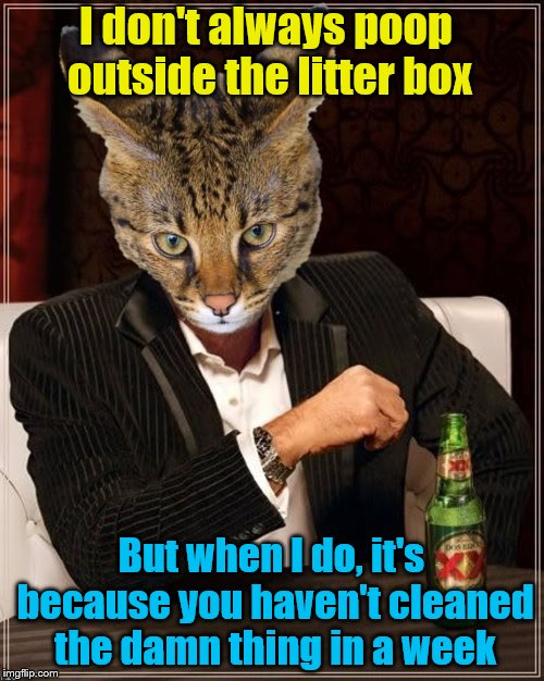 I don't always poop outside the litter box But when I do, it's because you haven't cleaned the damn thing in a week | made w/ Imgflip meme maker