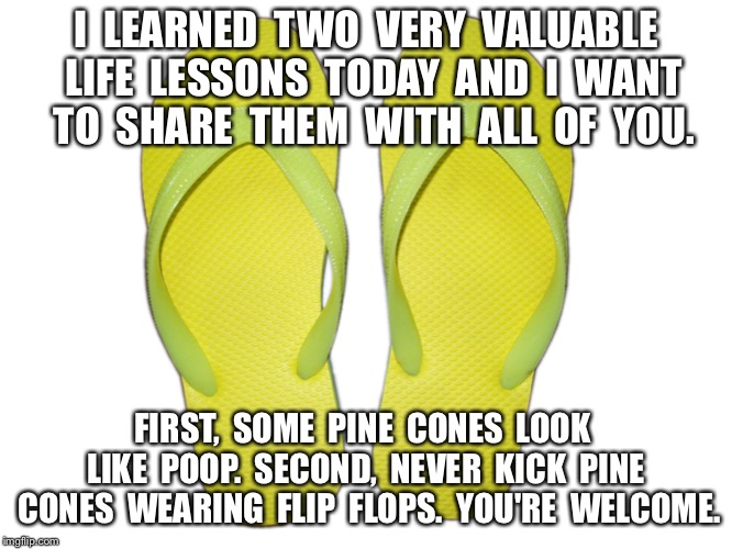 Flip Flops | I  LEARNED  TWO  VERY  VALUABLE  LIFE  LESSONS  TODAY  AND  I  WANT  TO  SHARE  THEM  WITH  ALL  OF  YOU. FIRST,  SOME  PINE  CONES  LOOK  L | image tagged in flip flops | made w/ Imgflip meme maker