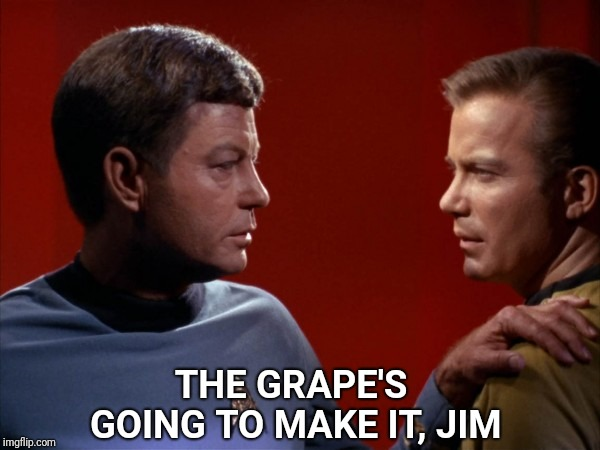 Where No Grape Has Gone Before | THE GRAPE'S GOING TO MAKE IT, JIM | image tagged in dammit jim,star trek kirk mccoy,surgery on a grape | made w/ Imgflip meme maker