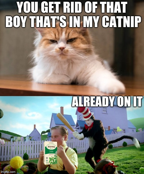 YOU GET RID OF THAT BOY THAT'S IN MY CATNIP ALREADY ON IT | image tagged in boss cat | made w/ Imgflip meme maker