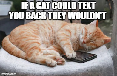 true dat | IF A CAT COULD TEXT YOU BACK THEY WOULDN'T | image tagged in cat,phone,text,funny | made w/ Imgflip meme maker