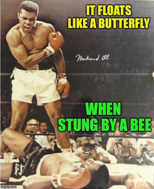 IT FLOATS LIKE A BUTTERFLY WHEN STUNG BY A BEE | made w/ Imgflip meme maker