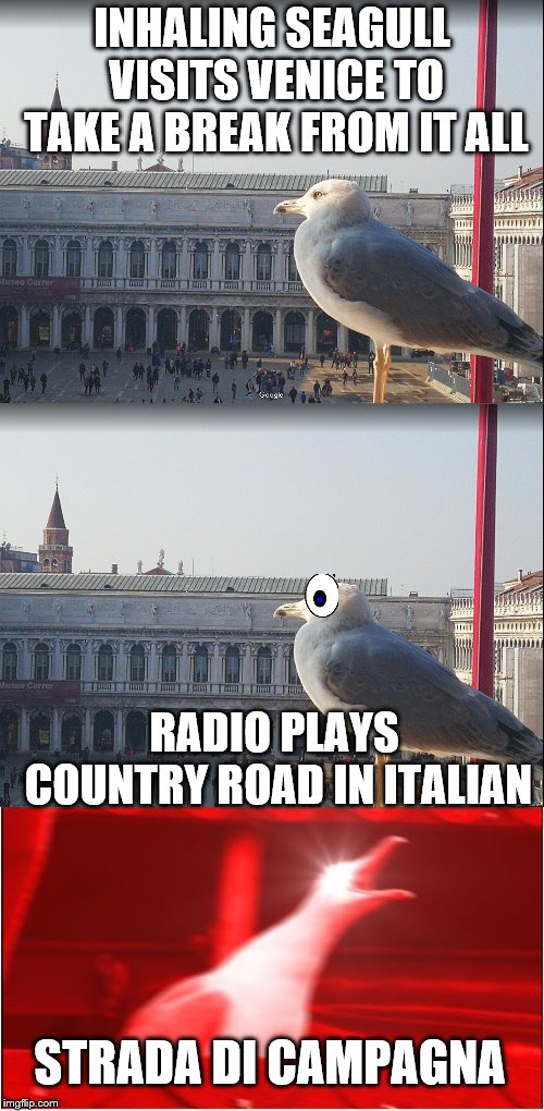 Portami a casa | INHALING SEAGULL VISITS VENICE TO TAKE A BREAK FROM IT ALL RADIO PLAYS COUNTRY ROAD IN ITALIAN STRADA DI CAMPAGNA | image tagged in inhaling seagull,inhaling seagull 4 red,visit,venice,country music,italian | made w/ Imgflip meme maker