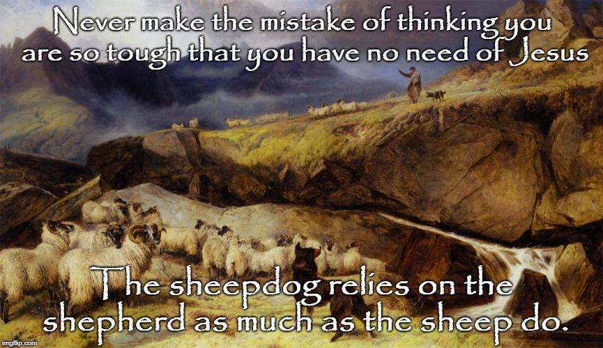 Sheepdog in Training | Never make the mistake of thinking you are so tough that you have no need of Jesus The sheepdog relies on the shepherd as much as the sheep  | image tagged in sheepdog,sheep,memes,tough guy,feed my sheep,jesus christ | made w/ Imgflip meme maker