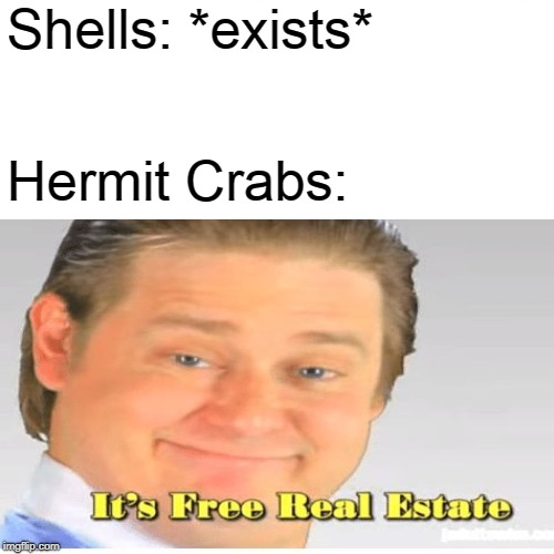 Shells: *exists* Hermit Crabs: | image tagged in its free real estate | made w/ Imgflip meme maker