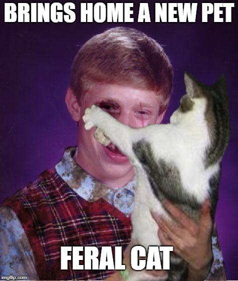 Brian adopts a pet - Imgflip
