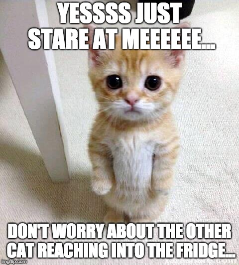 Bait | YESSSS JUST STARE AT MEEEEEE... DON'T WORRY ABOUT THE OTHER CAT REACHING INTO THE FRIDGE... | image tagged in memes,cute cat,stare,fridge,food,fool | made w/ Imgflip meme maker
