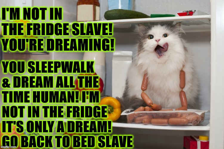 ONLY A DREAM | I'M NOT IN THE FRIDGE SLAVE! YOU'RE DREAMING! YOU SLEEPWALK & DREAM ALL THE TIME HUMAN! I'M NOT IN THE FRIDGE IT'S ONLY A DREAM! GO BACK TO  | image tagged in only a dream | made w/ Imgflip meme maker