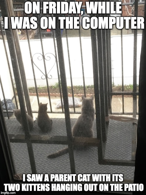 Cats on the Backyard | ON FRIDAY, WHILE I WAS ON THE COMPUTER I SAW A PARENT CAT WITH ITS TWO KITTENS HANGING OUT ON THE PATIO | image tagged in backyard,cats,memes | made w/ Imgflip meme maker