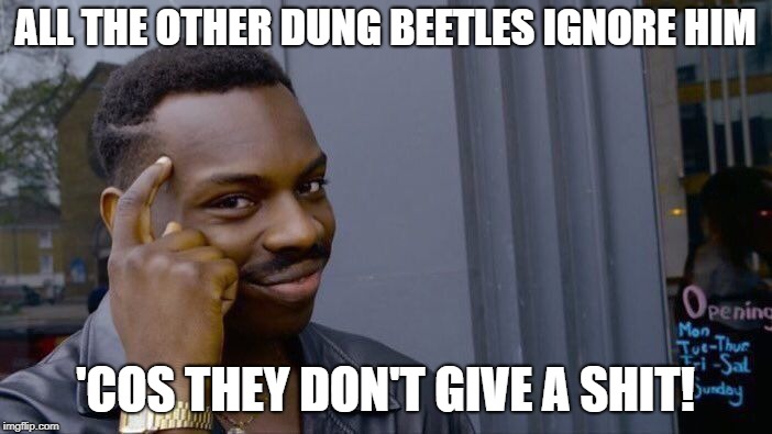 Roll Safe Think About It Meme | ALL THE OTHER DUNG BEETLES IGNORE HIM 'COS THEY DON'T GIVE A SHIT! | image tagged in memes,roll safe think about it | made w/ Imgflip meme maker