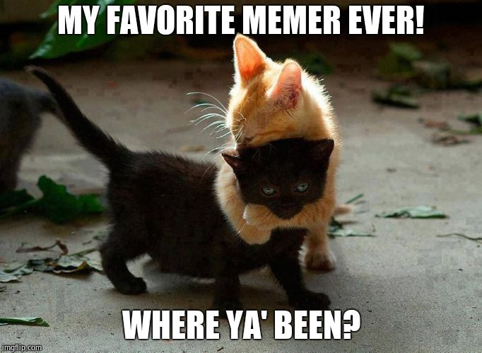 kitten hug | MY FAVORITE MEMER EVER! WHERE YA' BEEN? | image tagged in kitten hug | made w/ Imgflip meme maker