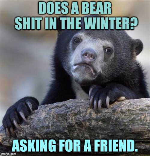 sad bear | DOES A BEAR SHIT IN THE WINTER? ASKING FOR A FRIEND. | image tagged in sad bear | made w/ Imgflip meme maker