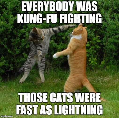 Kung-Fu Cats | EVERYBODY WAS KUNG-FU FIGHTING THOSE CATS WERE FAST AS LIGHTNING | image tagged in two cats fighting | made w/ Imgflip meme maker