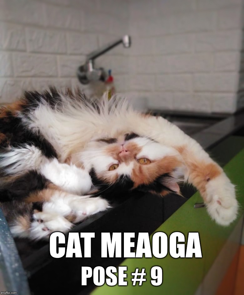 CAT MEAOGA POSE # 9 | image tagged in coco the cat | made w/ Imgflip meme maker