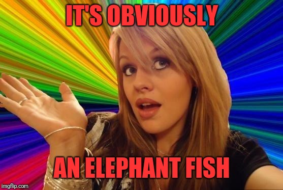 Dumb Blonde Meme | IT'S OBVIOUSLY AN ELEPHANT FISH | image tagged in memes,dumb blonde | made w/ Imgflip meme maker
