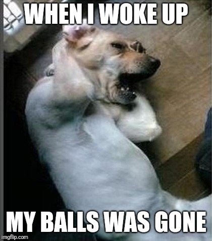 When I woke up... | WHEN I WOKE UP MY BALLS WAS GONE | image tagged in dog,ball,memes | made w/ Imgflip meme maker