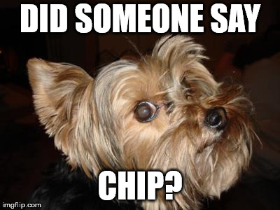 DID SOMEONE SAY CHIP? | image tagged in funny animals | made w/ Imgflip meme maker