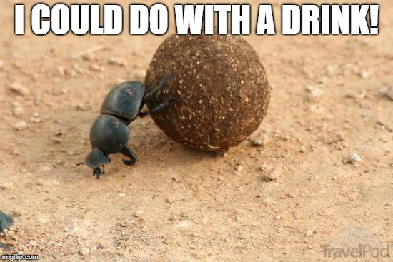 Hard Working Dung Beetle | I COULD DO WITH A DRINK! | image tagged in hard working dung beetle | made w/ Imgflip meme maker