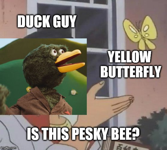 pesky bee | DUCK GUY YELLOW BUTTERFLY IS THIS PESKY BEE? | image tagged in dhmis,bee,butterfly,youtube | made w/ Imgflip meme maker