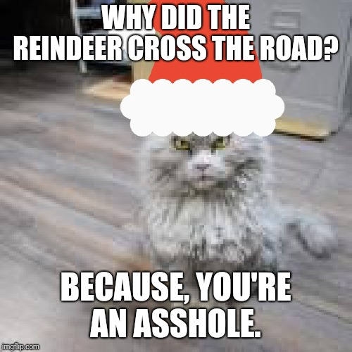 Bad joke cat. | WHY DID THE REINDEER CROSS THE ROAD? BECAUSE, YOU'RE AN ASSHOLE. | image tagged in grumpy cat,bad joke,cats,funny cats,funny animals | made w/ Imgflip meme maker