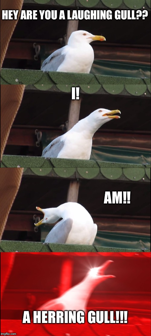 Inhaling Seagull Meme | HEY ARE YOU A LAUGHING GULL?? I! AM!! A HERRING GULL!!! | image tagged in memes,inhaling seagull | made w/ Imgflip meme maker