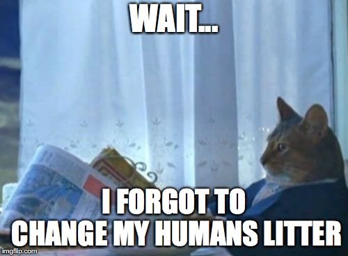 How did you think toilets worked | WAIT... I FORGOT TO CHANGE MY HUMANS LITTER | image tagged in memes,i should buy a boat cat,cats | made w/ Imgflip meme maker