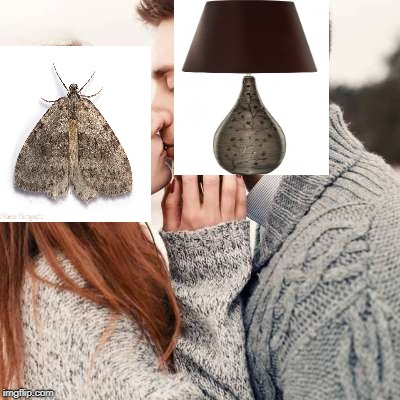 The moth and the lamp: A romantic relationship | image tagged in love,still a better love story than twilight,romance,bugs,teenagers,dating | made w/ Imgflip meme maker