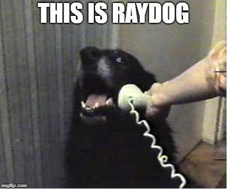 Yes this is dog | THIS IS RAYDOG | image tagged in yes this is dog | made w/ Imgflip meme maker