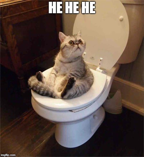 Cat on Toilet | HE HE HE | image tagged in cat on toilet | made w/ Imgflip meme maker