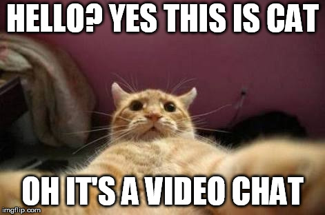 HELLO? YES THIS IS CAT; OH IT'S A VIDEO CHAT | image tagged in crazy animals | made w/ Imgflip meme maker