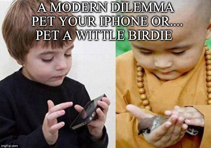 What To Do | A MODERN DILEMMA PET YOUR IPHONE OR.... PET A WITTLE BIRDIE | image tagged in dilemma,pet,iphone,birdie,child,buddist | made w/ Imgflip meme maker