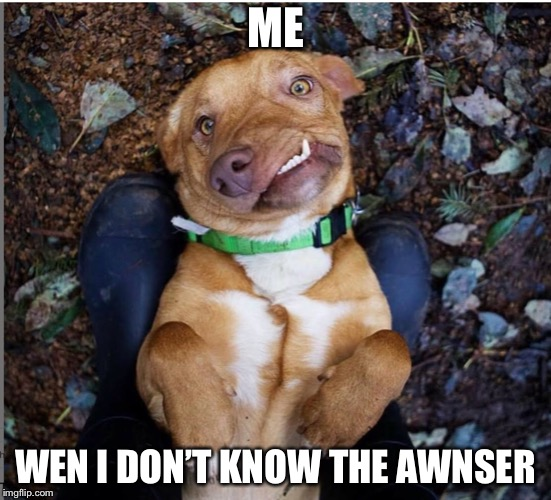 Me wen I don't know the awnser | ME WEN I DON'T KNOW THE AWNSER | image tagged in funny dog | made w/ Imgflip meme maker