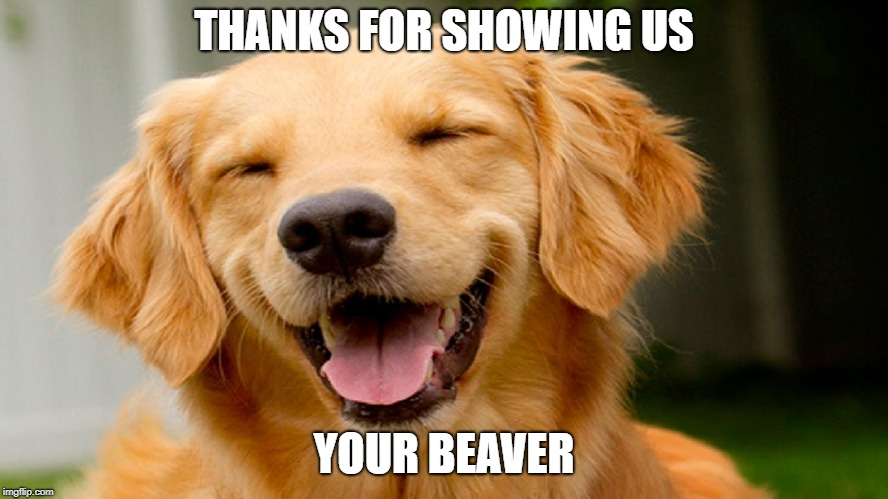 smiling dog | THANKS FOR SHOWING US YOUR BEAVER | image tagged in smiling dog | made w/ Imgflip meme maker