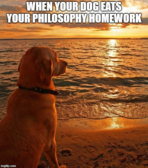 Two things are infinite: the universe and human stupidity; and I'm not sure about the universe | WHEN YOUR DOG EATS YOUR PHILOSOPHY HOMEWORK | image tagged in philosophy,dog,funny | made w/ Imgflip meme maker