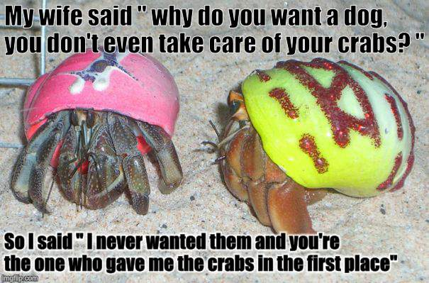 "I have crabs  | My wife said "" why do you want a dog, you don't even take care of your crabs? "" So I said "" I never wanted them and you're the one who gave  