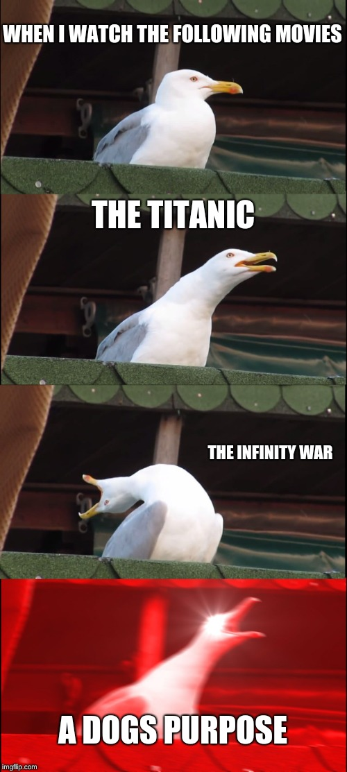 Inhaling Seagull Meme | WHEN I WATCH THE FOLLOWING MOVIES THE TITANIC THE INFINITY WAR A DOGS PURPOSE | image tagged in memes,inhaling seagull | made w/ Imgflip meme maker
