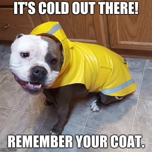 Pit bull in slicker | IT'S COLD OUT THERE! REMEMBER YOUR COAT. | image tagged in pit bull | made w/ Imgflip meme maker