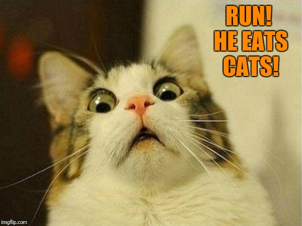 Scared Cat Meme | RUN! HE EATS CATS! | image tagged in memes,scared cat | made w/ Imgflip meme maker