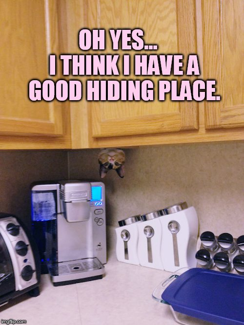 OH YES...   I THINK I HAVE A GOOD HIDING PLACE. | made w/ Imgflip meme maker