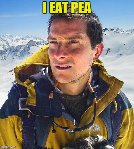 Bear Grylls Meme | I EAT PEA | image tagged in memes,bear grylls | made w/ Imgflip meme maker