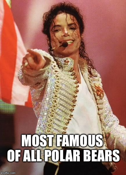 Michael Jackson Pointing | MOST FAMOUS OF ALL POLAR BEARS | image tagged in michael jackson pointing | made w/ Imgflip meme maker