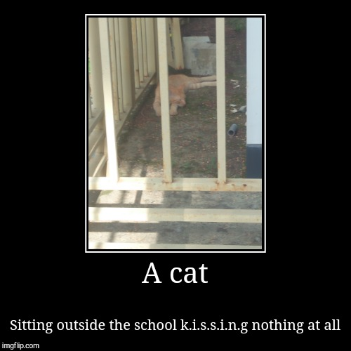 A cat | Sitting outside the school k.i.s.s.i.n.g nothing at all | image tagged in funny,demotivationals | made w/ Imgflip demotivational maker