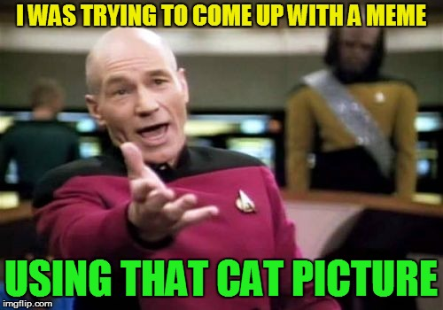 Picard Wtf Meme | I WAS TRYING TO COME UP WITH A MEME USING THAT CAT PICTURE | image tagged in memes,picard wtf | made w/ Imgflip meme maker